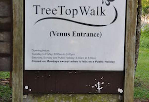 121006-MBF-Tree-Top (17)